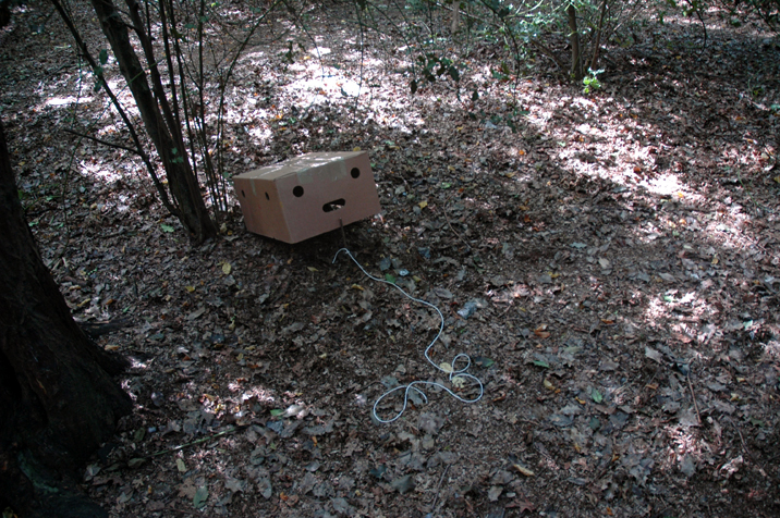 Cardboard trap in Queens Wood