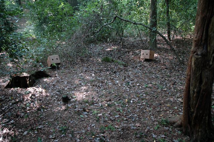 Cardboard traps in Queens Wood